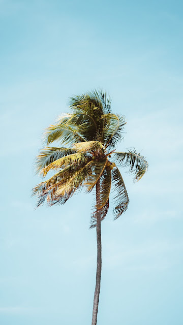 Wallpaper palm tree, tree, leaves, free sky