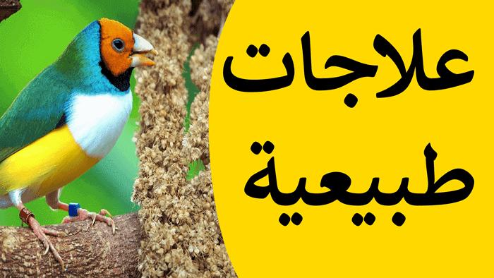مواد طبيعية لعلاج الطيور ووقايتها من الأمراض بمواد طبيعة متل خل التفاح الثوم و الفحم