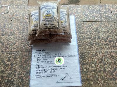 Benih padi yang dibeli THOHA FUADI Jepara, Jateng. (Sebelum packing karung ).