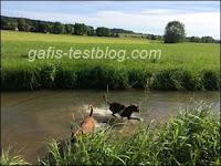 Amy und ihr Bruder Baxter haben Spaß im Wasser