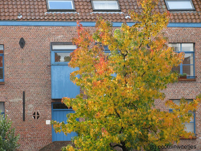 Herfstkleuren van herfstbladeren