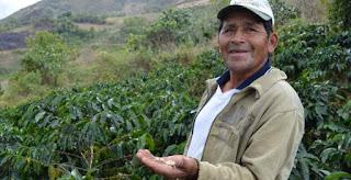 Harga kopi di Tingkat Petani