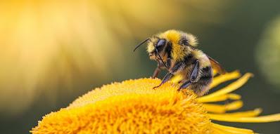Είναι απαραίτητες οι μέλισσες για την υγεία μας;