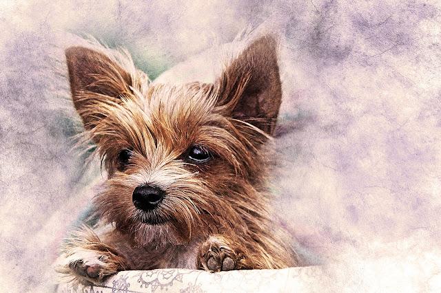 صورة كلب بني مرسوم