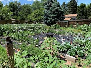 Urban farm overview photo