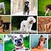 ¿Cómo llamar a tu can? Nombres para perros por su color y tamaño ¡Conócelos!