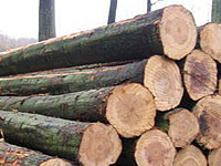 TBK: Increase Demand Of Malaysia Timber