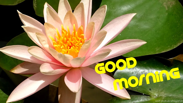 Good morning image lotus