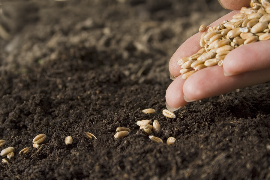 Global Market Research Reports : Ken Research: Monsanto Seed