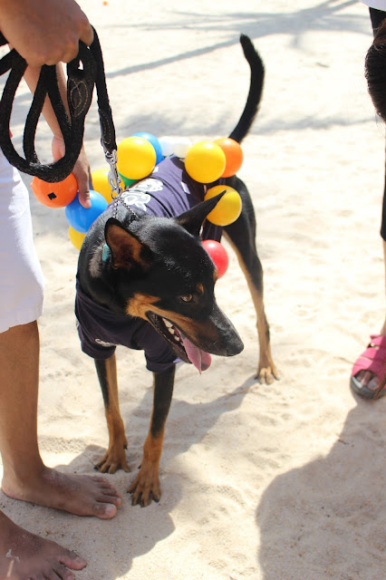 Dog Adoption Singapore
