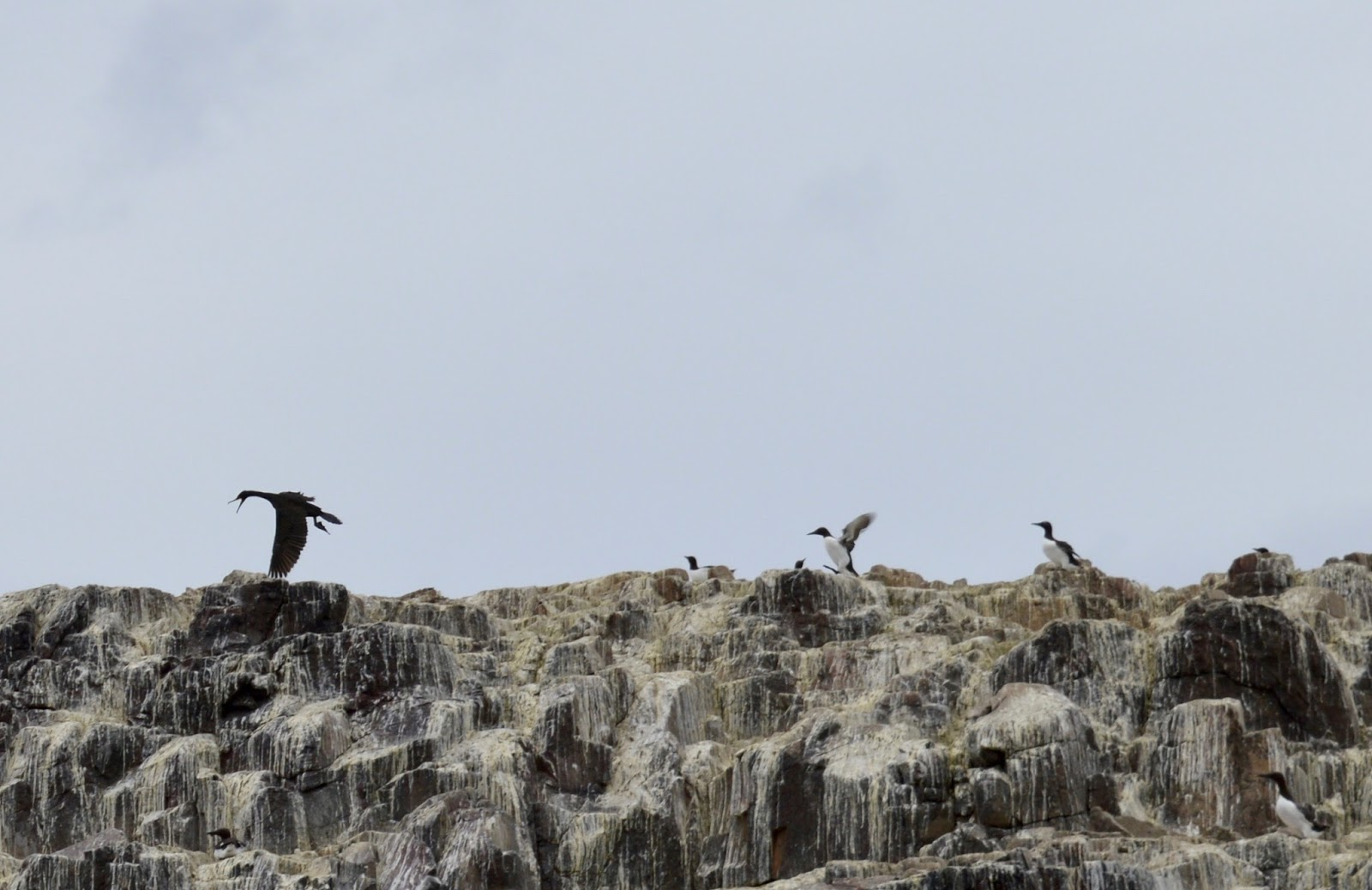 Farne Island Boat Trips with Serenity | A review and what to expect with kids - birds