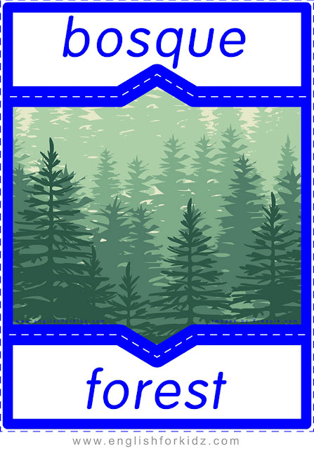 Forest in Spanish, English-Spanish flashcard