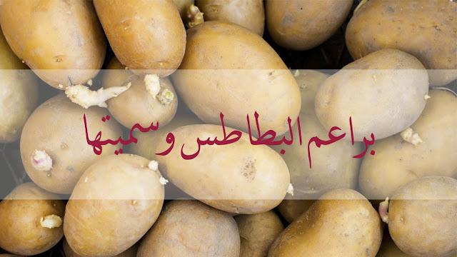 براعم البطاطس وسميتها