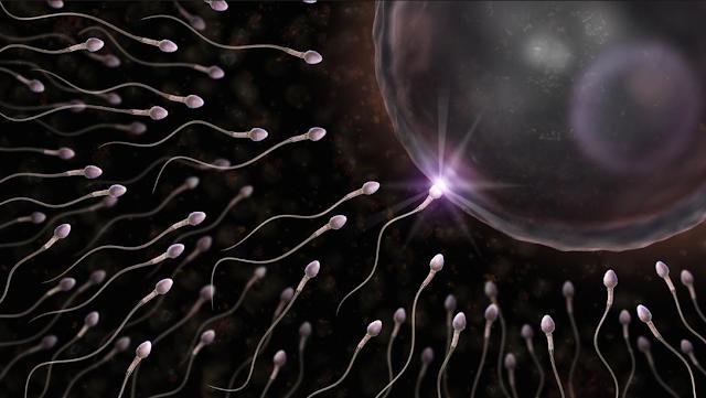 6 نصائح لتدعيم القدرة الجنسية وزيادة فرص الإنجاب