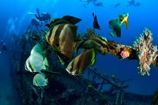 Top Scuba Diving and Flying Guide!