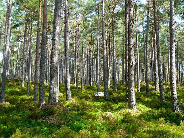 alberi ecosia