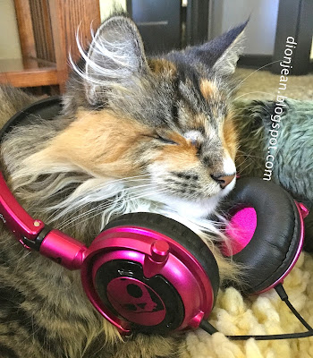 Lucy the cat wearing some headphones
