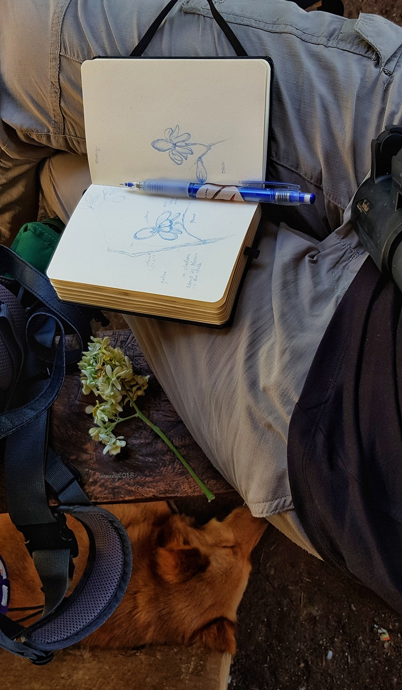 d0678addc1ca Britney napping beside me while I do nature sketch.. This is Malunggay  flower from our home stay s yard. We had the whole afternoon free of our  first day in ...