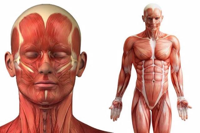 10 πράγματα που δε γνωρίζατε για το ανθρώπινο σώμα
