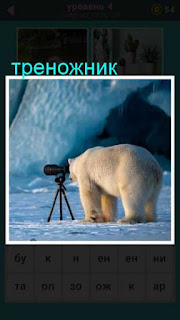 стоит треножник с фотоаппаратом в который смотрит белый медведь