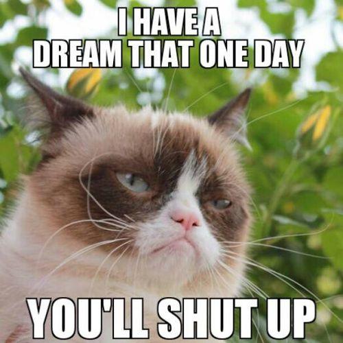 Grumpy Cat Memes 1