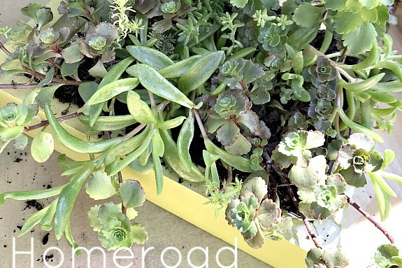 DIY Mother's Day Succulent Planters