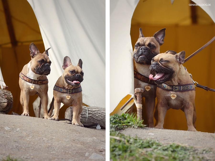 Ausflug mit Hund in den Bergtierpark Fürth-Erlenbach