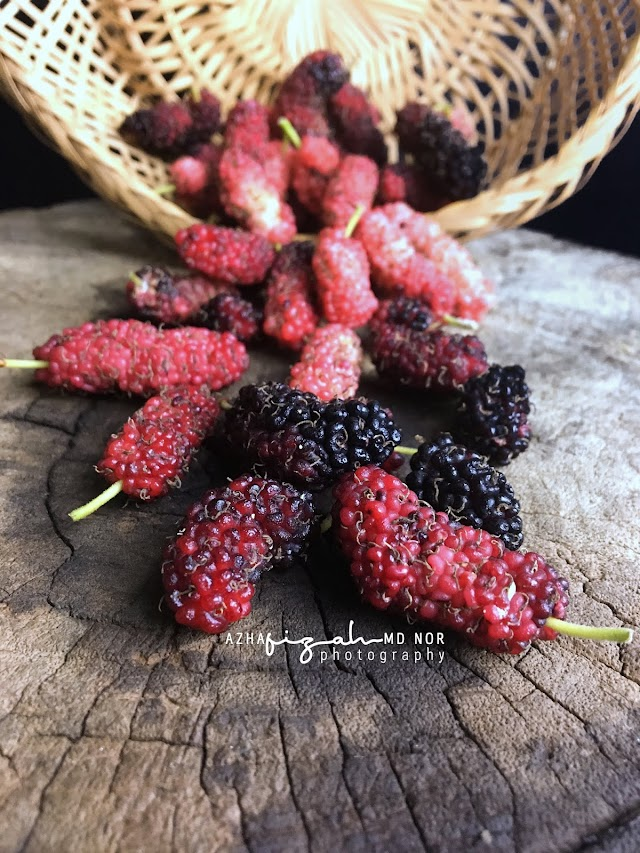 Buah Mulberry Masam Manis