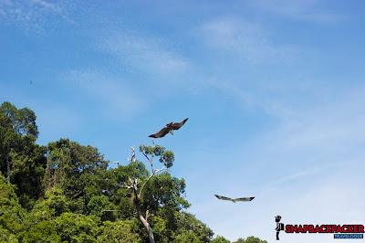 Langkawi Eagle Feeding Point
