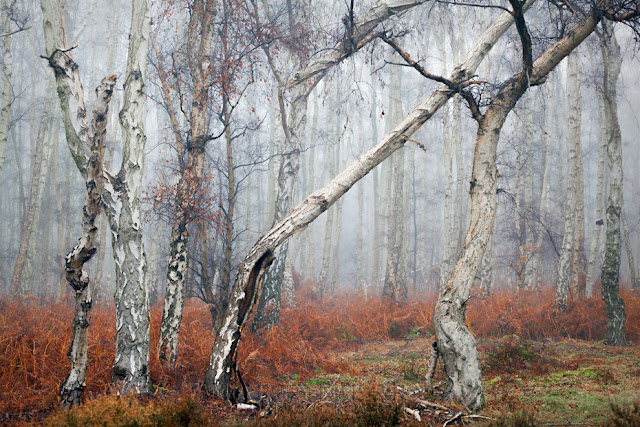Misty conditions at Holme Fen in the Cambridgeshire Fens