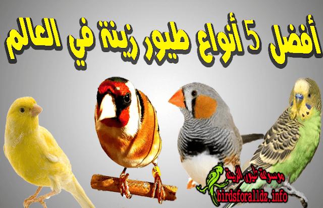 افضل 5  انواع طيور زينة في العالم