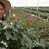 ECONÓMICAS / Presidente Duque pide a los floricultores acelerar la Agenda 2030 para el sector, generando más empleo para los colombianos
