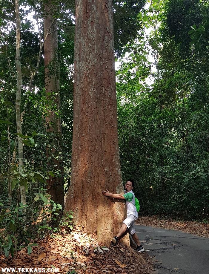 Hugging Trees in Taman Botanikal Melaka