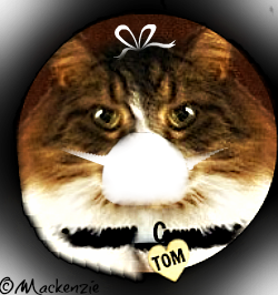 CONFESSIONAL HOURS WITH TOM: SATURDAYS AND BY APPOINTMENT
