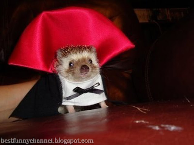 Hedgehog Dracula