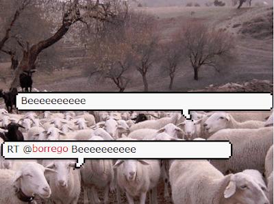 RT borregos ovejas