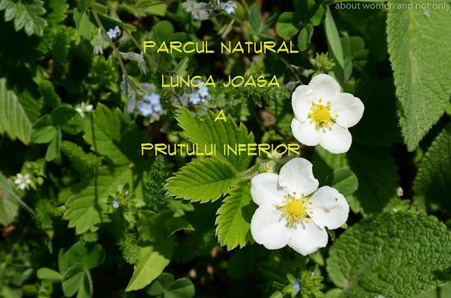 S-a constituit pentru protectia si conservarea biodiversitatii din lunca inundabila a raului Prut.