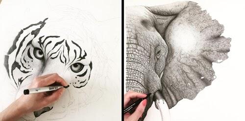 00-Animal-Drawings-Stine-Lee-www-designstack-co