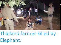 https://sciencythoughts.blogspot.com/2019/06/thailand-farmer-killed-by-elephant.html