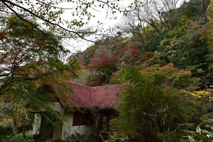 紅葉に埋もれた廃屋