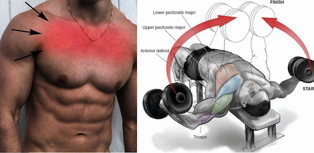 How to Easily Build Upper Chest Muscles