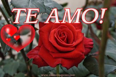 Imágenes románticas de rosas con frase TE AMO