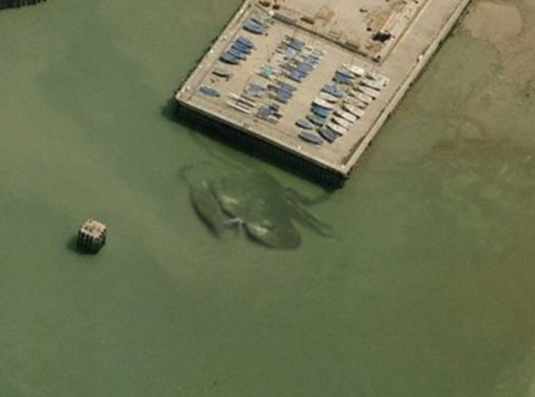 Bờ biển Anh náo loạn vì cua khổng lồ 15 mét