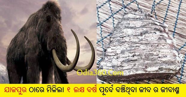 Fossils of ancient mammoth found at odisha's Jajpur