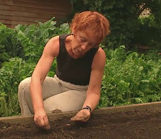 Carol sows cabbage seeds