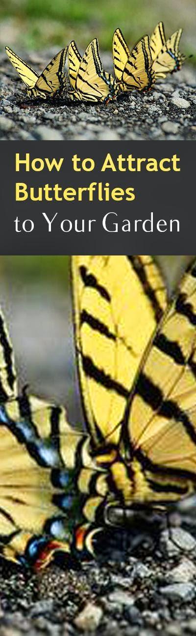 Garden DIY | Dreaming Gardens