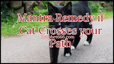 Paranormal Remedy if Black Cat Crosses your Path