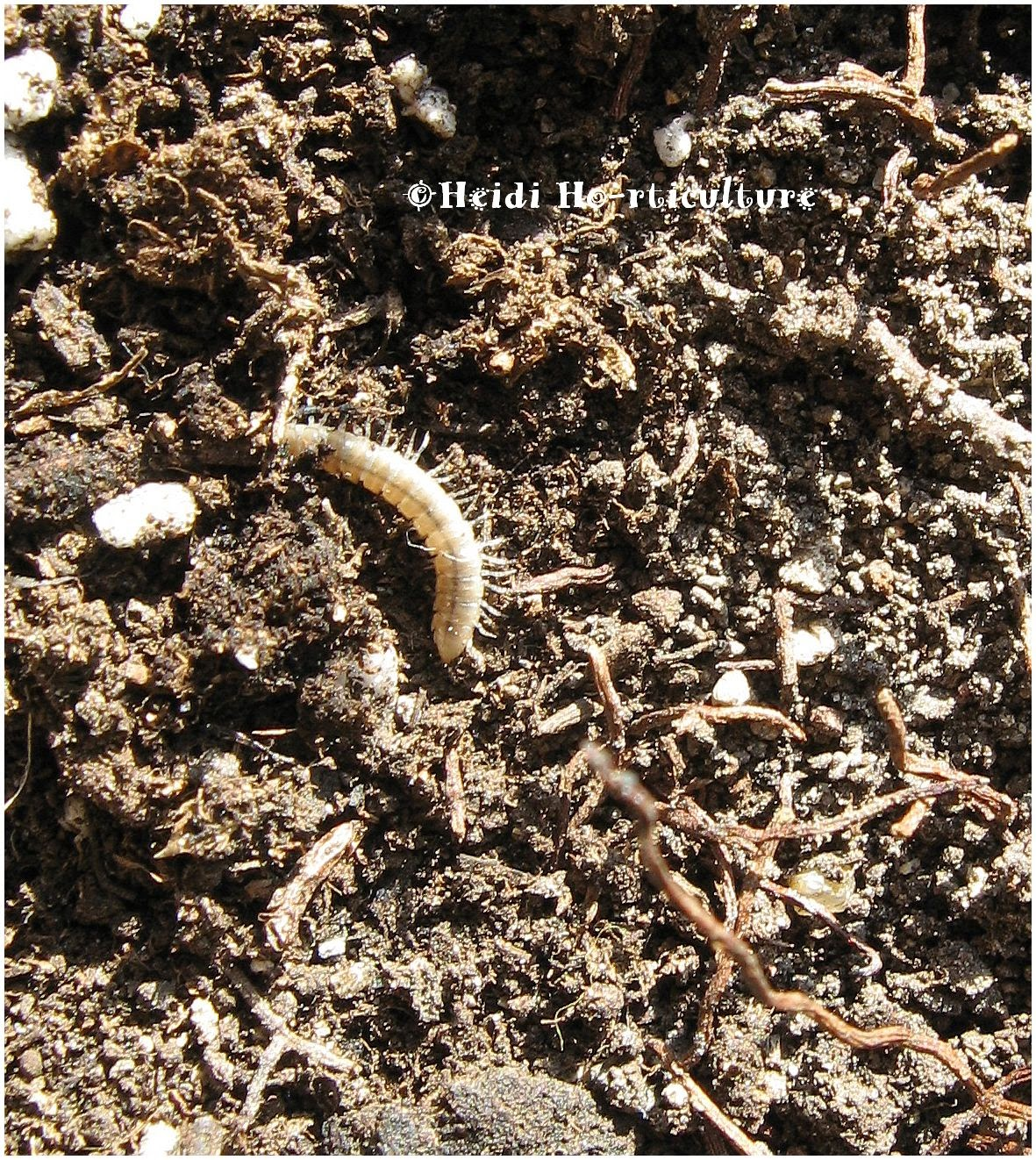 Heidi Horticulture: Worms in house plant soil