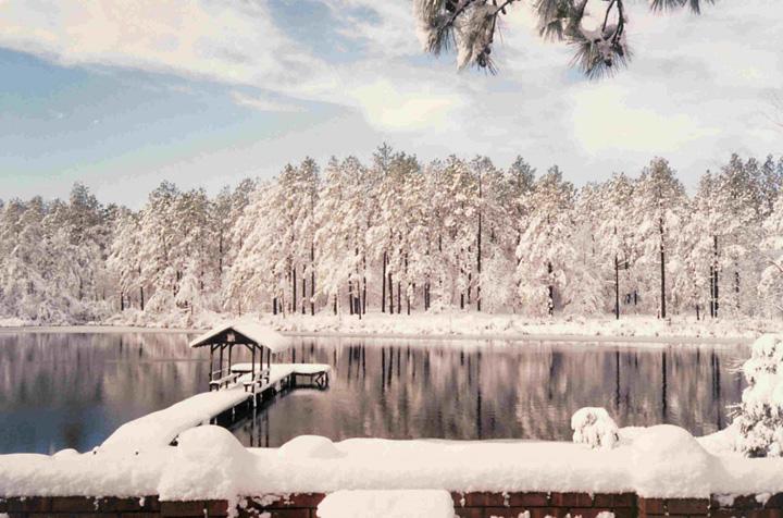 karlı orman kış resimleri