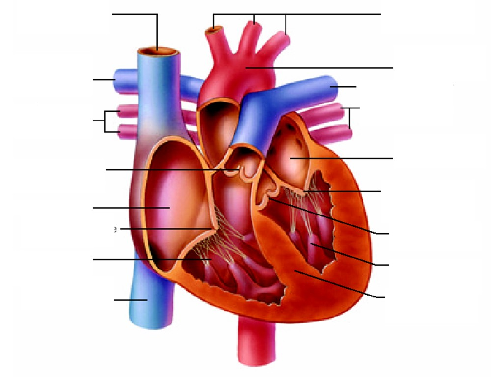 Sasic 4th Grade Class Heart Healthy Kids